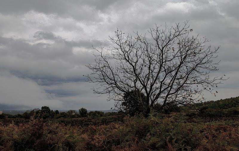 Terra desolata di frapio59
