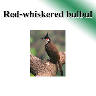 Birds per bird - náhled