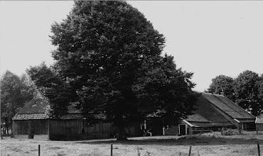 Photo: Kerkstraat 26, achterzijde woning met de grote lindenboom