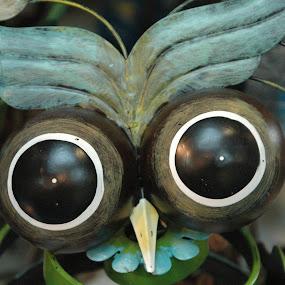 Bug eyed by Wayne Paton - Artistic Objects Still Life ( pwcstilllife-dq )