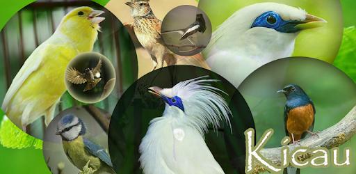 Pentet Birds Chirping Madura On Windows Pc Download Free 5 5 Com Fullkicauburungpentet Kicaupentetmadura
