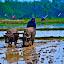 by Jaya Prakash - Professional People Agricultural Workers