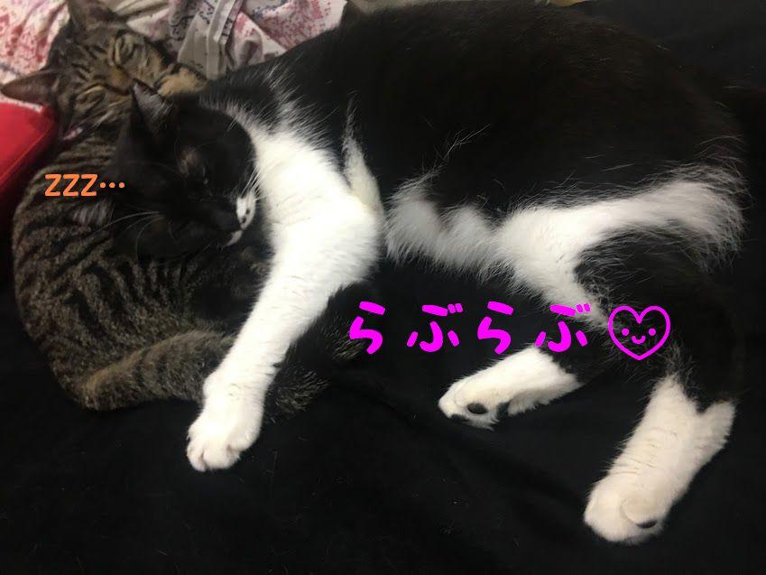 愛猫のフォトブックを手作り!スマホで簡単、おすすめアルバム写真サービス