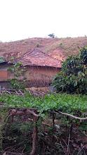 Photo: Basale soppina chappra