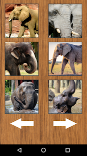 Funny Big Elephant Sounds - náhled