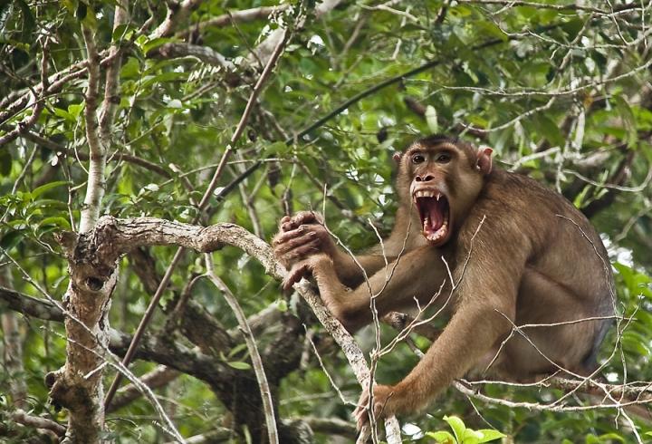 Il pianeta delle scimmie di dadaphoto