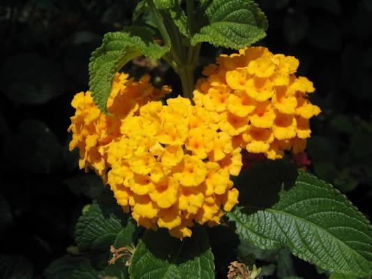 La natura e le sue sfumature di laidlaw81