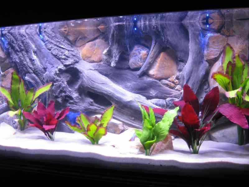 aquarium decoration ideas android apps on google play - Freshwater Aquarium Design Ideas