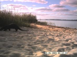 Photo: Kanomika Latrine - Edgartown Great Pond