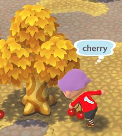 フルーツを拾う