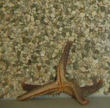 Photo: starfish