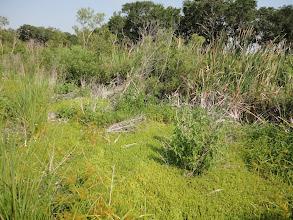 Photo: A lot of soft marshy ground around the pond margins.