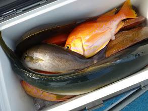 Photo: 釣果です。 タカオさんの釣果。ヒラスがよかったですね! 刺身うまいっすよー!