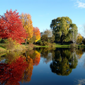 Foliage in Amherst, MA by Anastasiya Manuilov - Landscapes Travel ( pond, fall, massachusetts, autumn, trees, amherst )