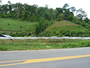 Photo: Chiang Mai - Samoeng loop, many foil houses (?) all around this road