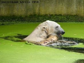 Photo: Knut hat den Baumstamm...