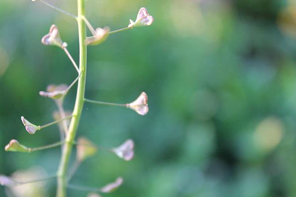 Anche i fiori hanno il cuore. di GaiaDePretis