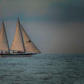 Into the Blue by Pennye Thurmond - Digital Art Places ( sailboat, sail, ocean, blue, key west )
