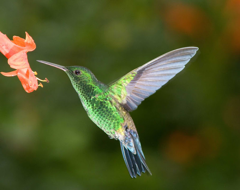 See gorgeous hummingbirds and rare wildlife on a cruise to the Panama Canal.