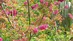 jardins-fleuris-et-espaces-verts