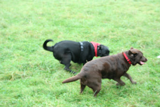 Photo: Dicer Lab running with his favourite girl, Fate...