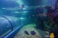 Oceanarium Boracay