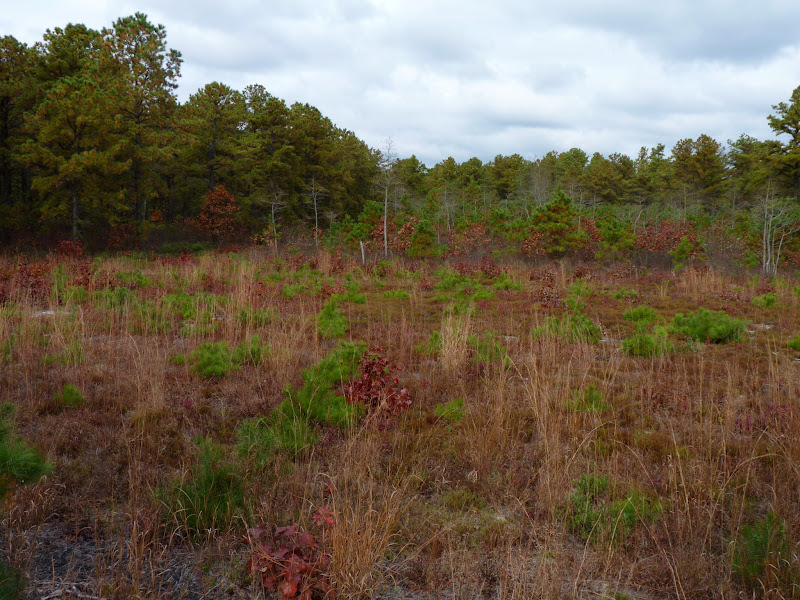 Photo: Disturbed meadow