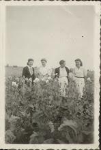 Photo: Od lewej: Zofia Berezowska (zam. Kordal), Stanisława Dąbrowska (zam.Suchorowska), Emilia Rokaszewska, Janina Dąbrowska (zam. Nawrocka).