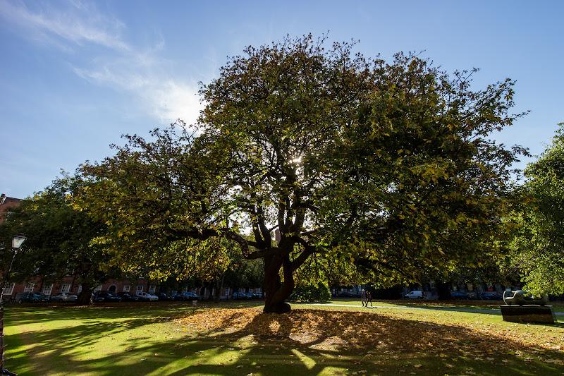 Photo: Tree in Trinity