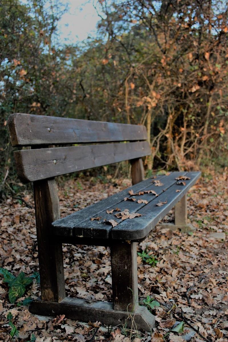 panchina nel bosco di andreaparenti16