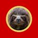 Sloth Eat Egg Please