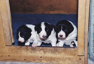 Photo: De drie pupjes van het eerste nest.