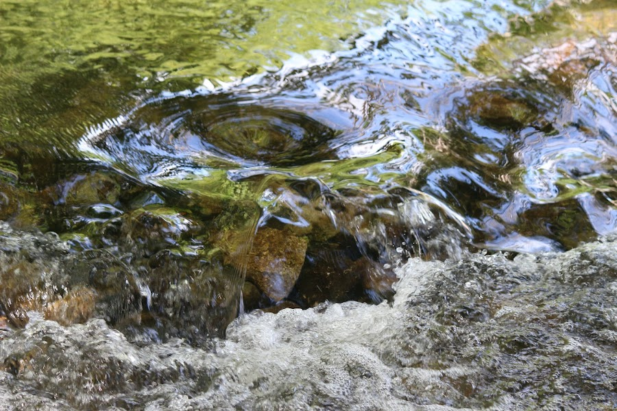 by Michelle Bonin - Nature Up Close Water