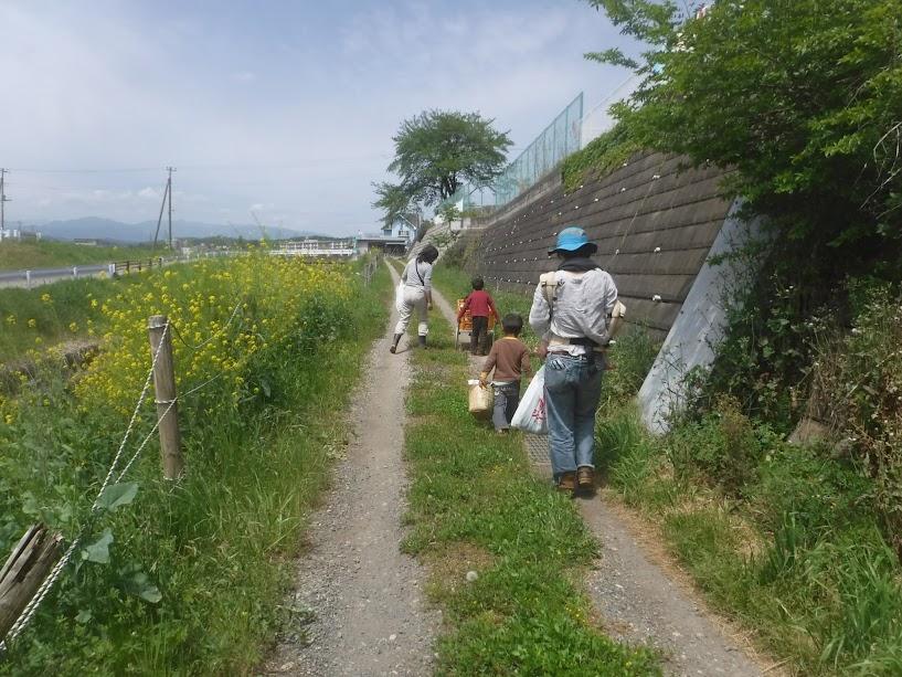 南小畔川沿いの野草を収穫