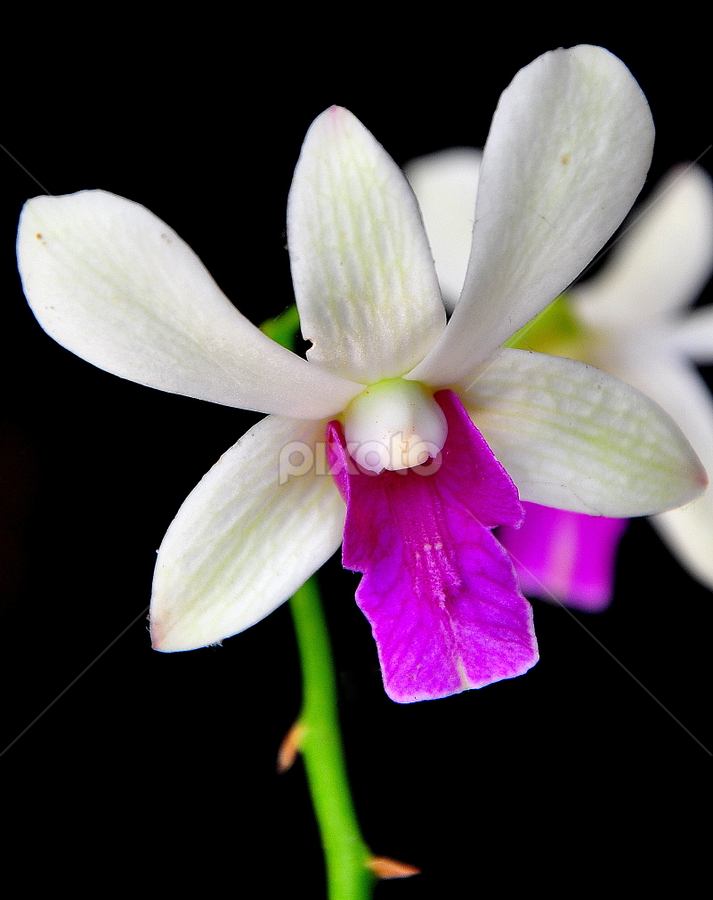 by Ririen Yunus (ryu031) - Novices Only Flowers & Plants
