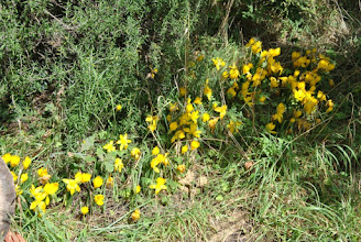 Photo: Parterre de fleurs en plein soleil.