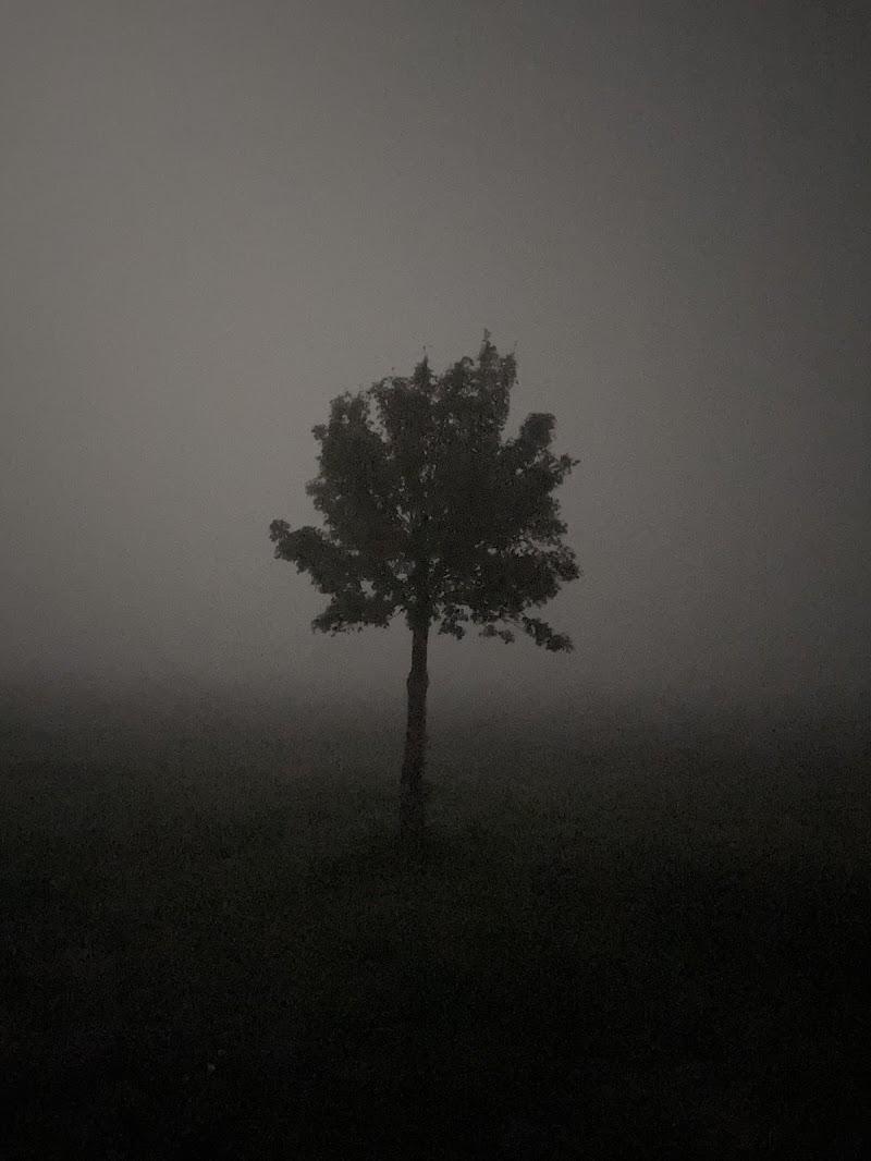 Nella nebbia di heartlex