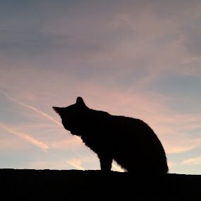 Dusk silhouette by Antonio Knezevic - Animals - Cats Portraits ( sky, cloud, dusk, cat, tree, clouds )