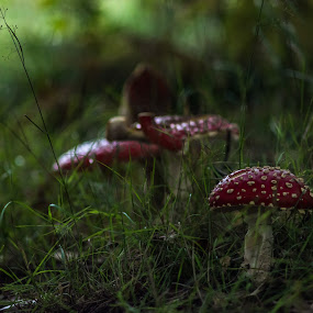 by Clayton Warby - Nature Up Close Mushrooms & Fungi (  )