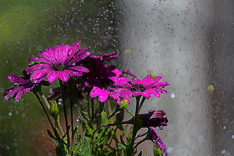 Pioggia sui fiori di utente cancellato
