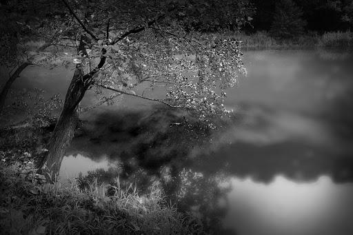 paysage arbre sur plan eau par jerome caron photographe