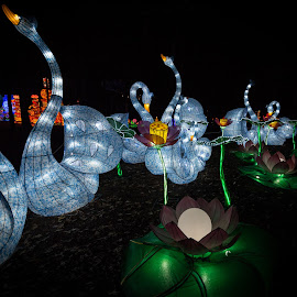 Lantern Festival 8 by Harvey Lindenbaum - City,  Street & Park  Night ( chinese lantern festival, night )