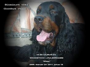 Photo: Int Sh Ch,Multi Ch WOODSTOCK v.PULSERDAMM 'Wizzy' (CH Reggededge Real Looker (USA) - Ch O'Reilly Ayla)  http://www.saturnii.eu/
