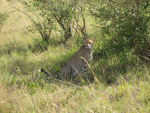 Photo: Our only Cheeta sighting