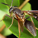 Wasp mimic horse-fly