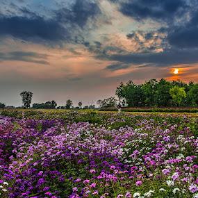 Colors by KP Singh - Flowers Flower Gardens ( langrian, beauscape, malerkotla, flower, dhindsa,  )