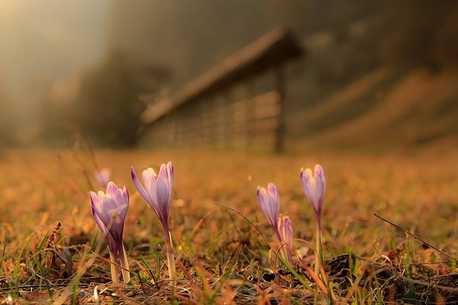 Slovenia by Domen Dolenc - Landscapes Prairies, Meadows & Fields ( slovenia, landscape, safron )