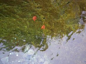 Photo: żabcia pływa w lodowatej wodzie