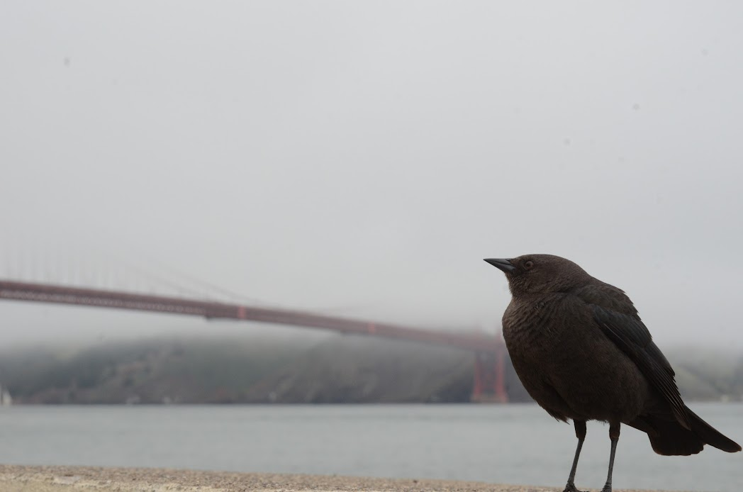 A bird at Golden Gate Bridge