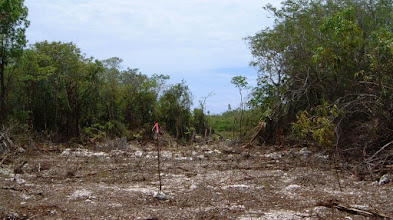Photo: 2003 Survey trail from Outpost Road, Windsor Park (eastern approach)  stopped at the swamp, May 25, 2003
